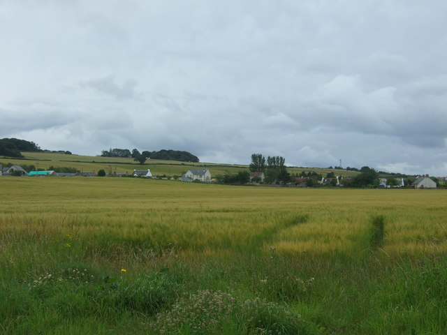 Cereal crop towards Whitehill