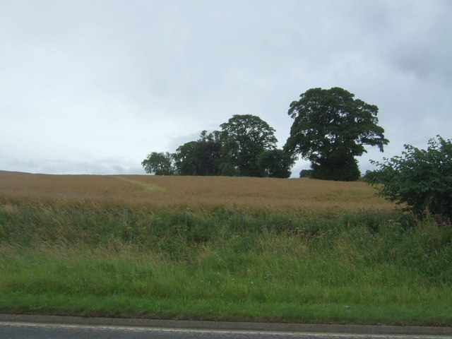 Cereal crop and trees above the A6106