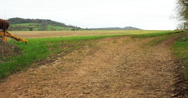 Field near Mapperton Farm