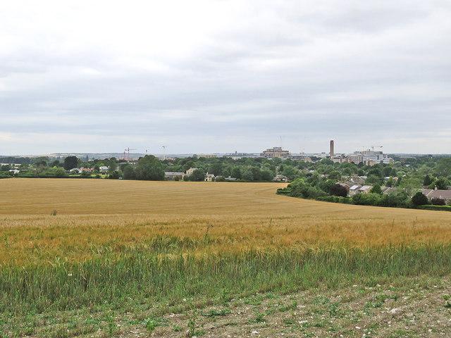 A barley field on Limekiln Hill