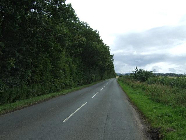 B6371 beside woodland