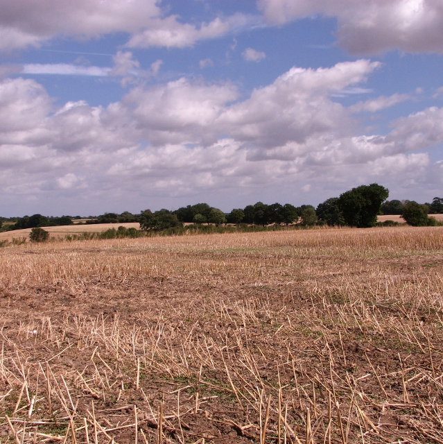 Oilseed rape stubble between Rockland St Mary and Surlingham