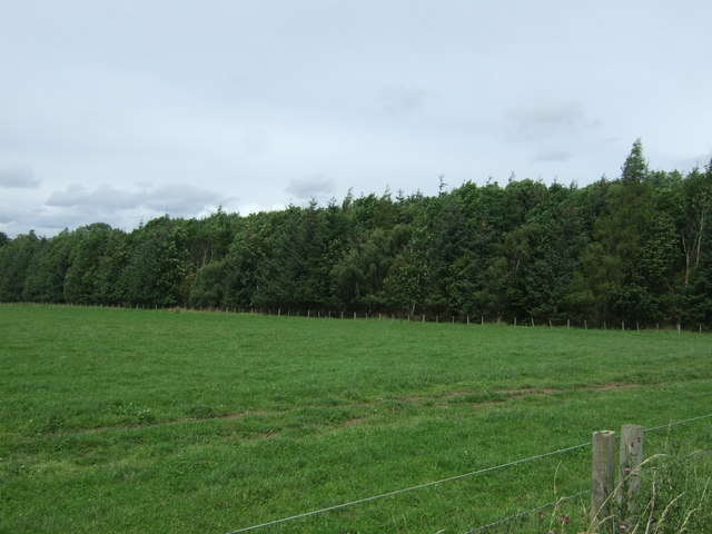 Grazing and woodland near Saltoun Hall