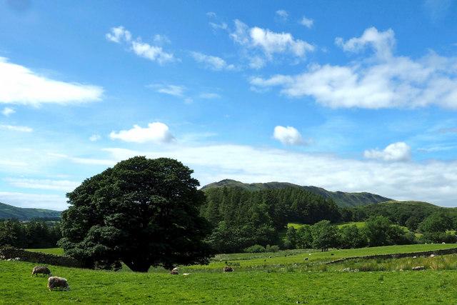 Fields near Lanthwaite Green Farm
