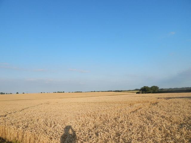 Wheat field, Burstall