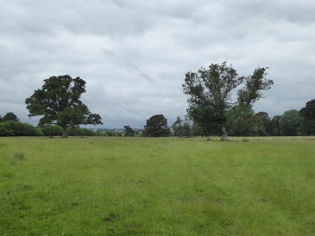 Grassland by path to Sowton