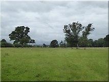 SX9891 : Grassland by path to Sowton by David Smith