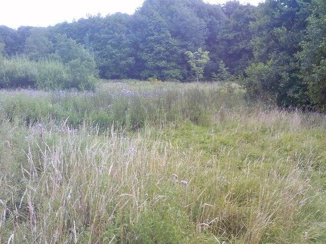 Northway Meadow
