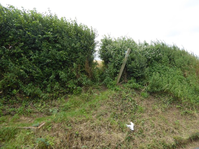 Footpath to Clyst St Mary through overgrown hedge