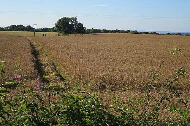 Field near Malcolmston