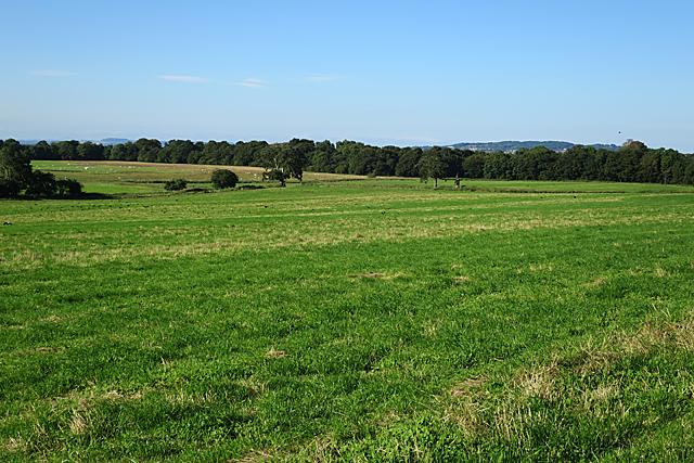 Field near Warriston