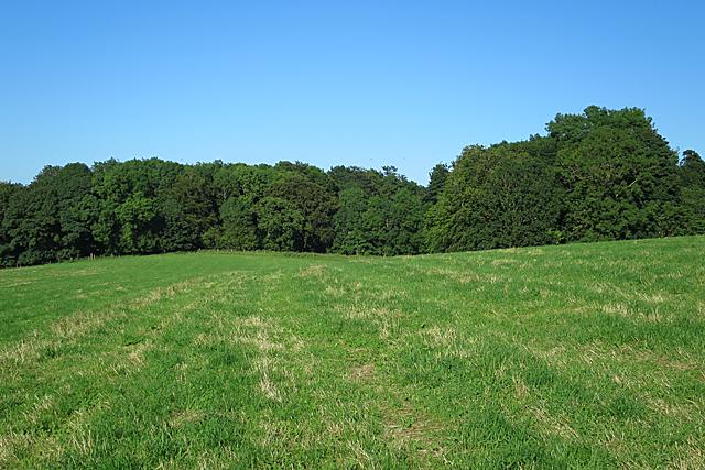 Woods near Warriston