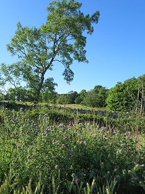 Near Gowanhill