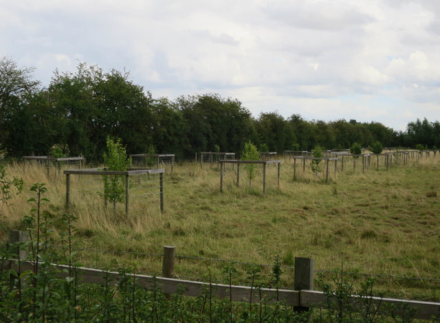 Orchard at Fen Drayton Lakes