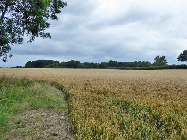 Wheat field north of Sandels Wood