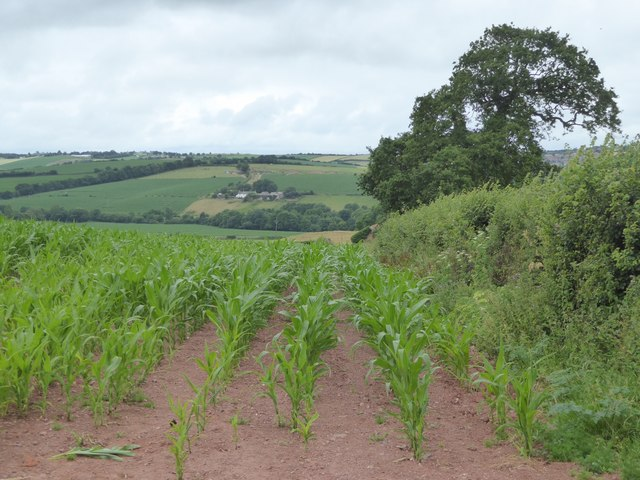 Maize field and Yeo valley