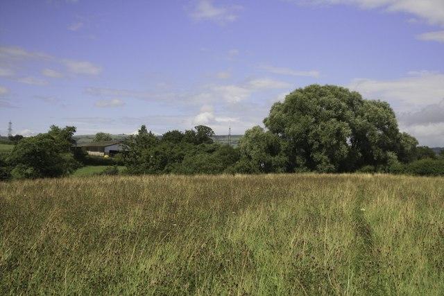 Beautiful meadow near Lower Coppice