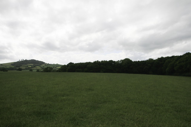Lower Coppice