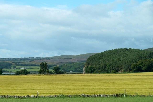 Fields near Kirkton