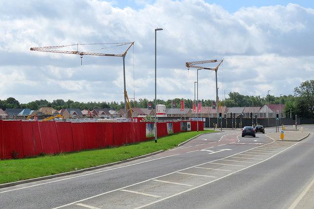 Cranes at Hauxton Meadows