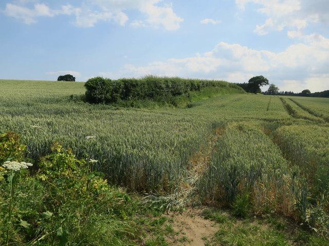 Fields by Salhouse Road