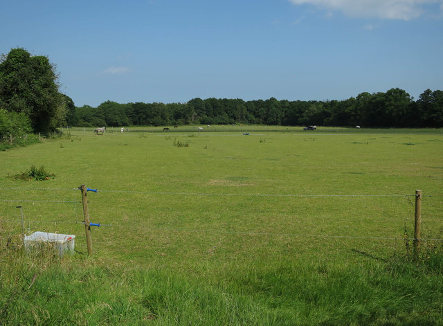 Horse paddocks by Ferry Road