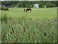 SO9558 : Bulrushes and horses, Saldons Farm by Jeff Gogarty