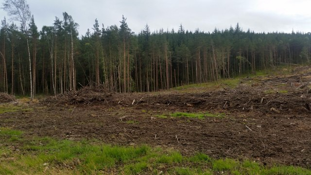 Cleared forest near Struy