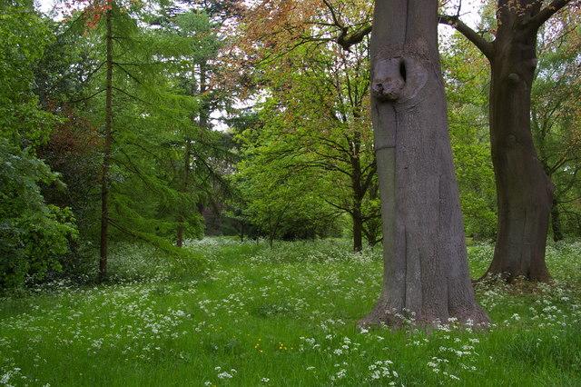 University Parks, Oxford: north-east corner