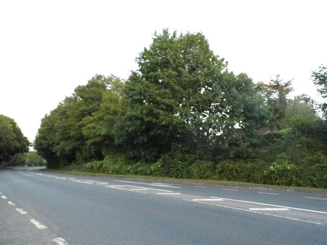 Badger Farm Road, Winchester