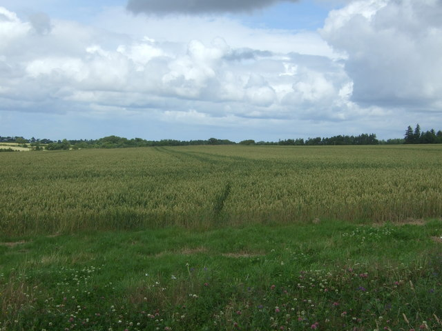 Cereal crop, Townhead