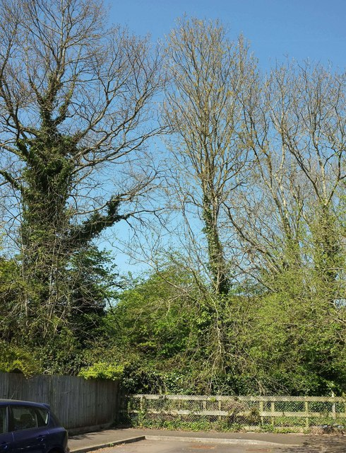 Woodland behind Nuthatch Drive, Torquay