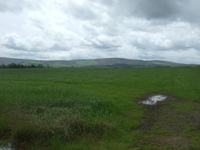 Grassland, Danskine