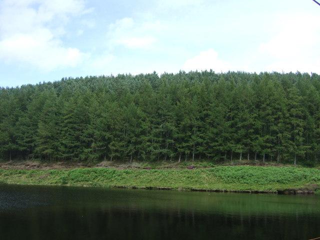 Woodland beside the Whiteadder Reservoir
