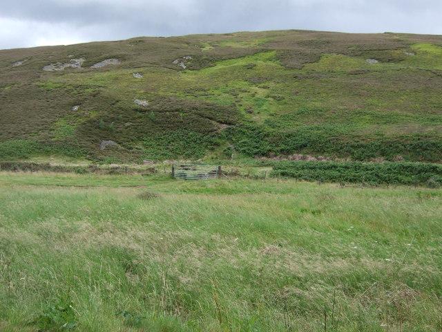 Grassland near the Whiteadder Water