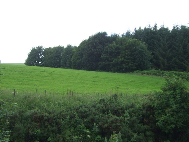 Grassland and woodland near Whiteadder Water