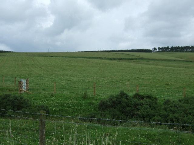 Recently cut silage field, Fellcleugh