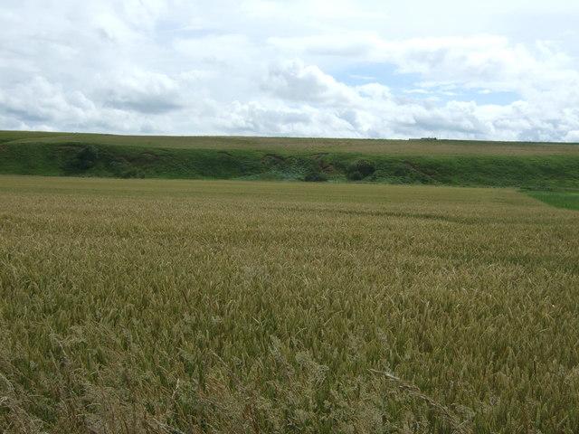 Cereal crop, Broombank