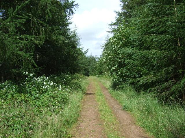 Track through woodland, Ellemford Bridge