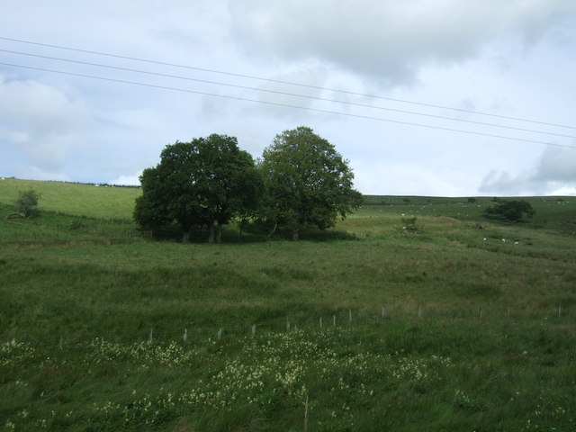 Hillside grazing near Whitchester Lodge