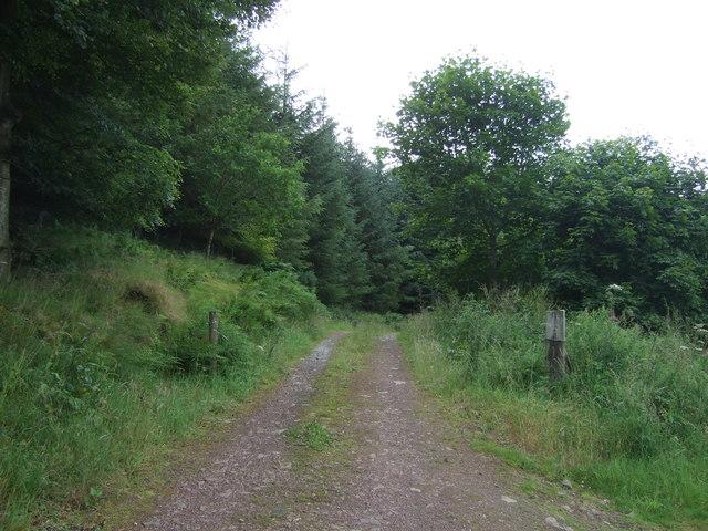 Track into Lodge Wood