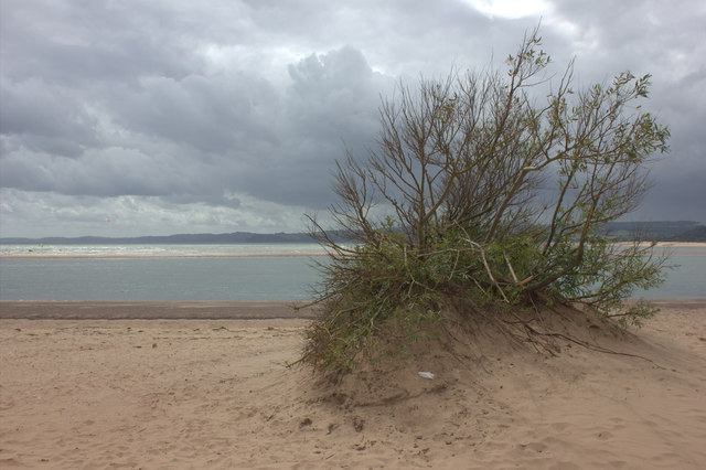 Exmouth beach. An outcrop of vegetation
