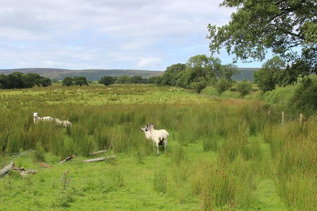 Field beside Leagram Mill