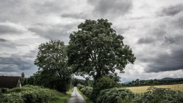 Trees by minor road near Wester Lonvine