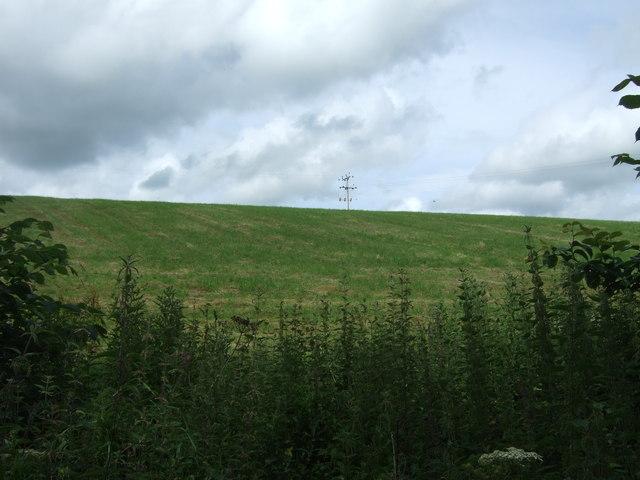 Grassland, Millburn Bridge