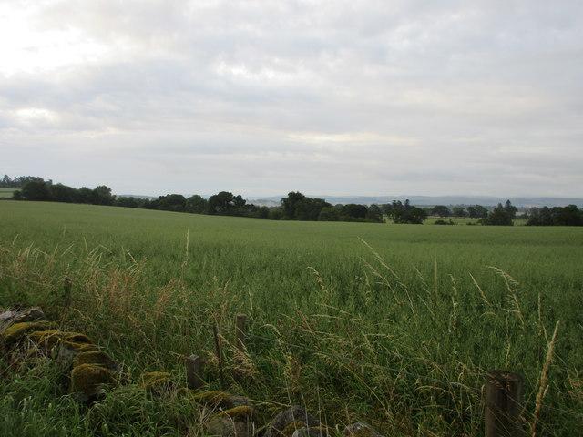 Field, north of the Isla