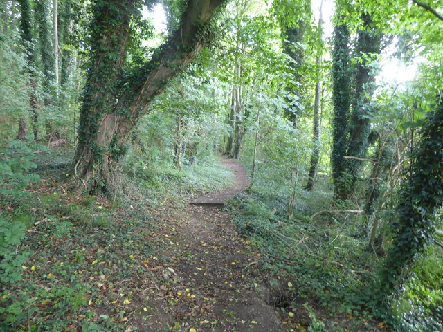 Footpath in the woods, Ferry Cliff