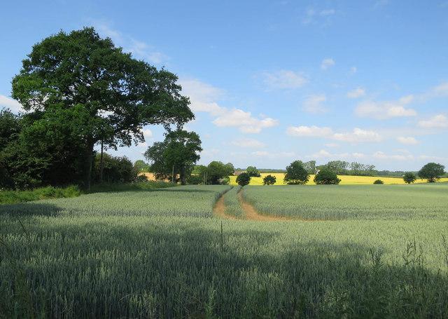 Field by Burlingham Road