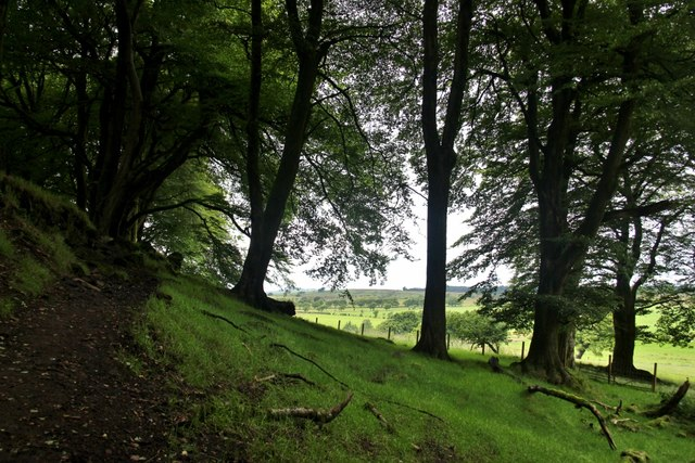 Shady woods on the north side of Loudon Hill