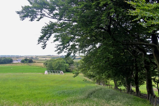 Cereal and ancient hedge at Loudon Hill